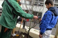 Achtsam werden die Zweige beschnitten