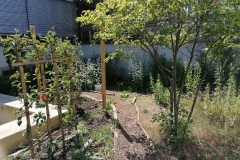 Im Sommer 2020 grünt und blüht der Innenhof-Garten